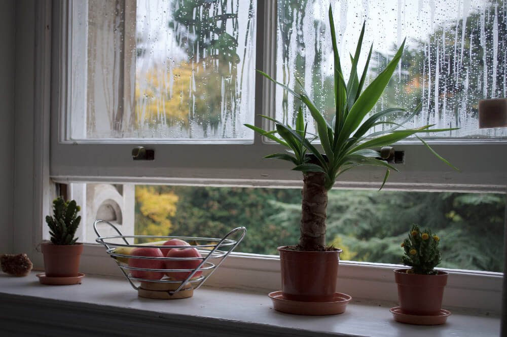 Dealing with Humidity and Your Windows