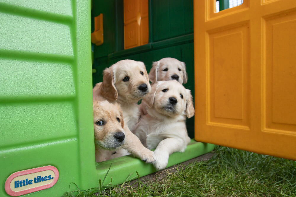 Doggie Doors for your Home